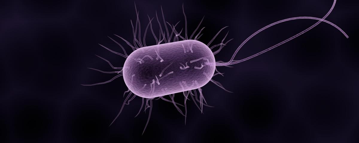 Artrita reactiva - o complicatie a infectiilor intestinale si urogenitale